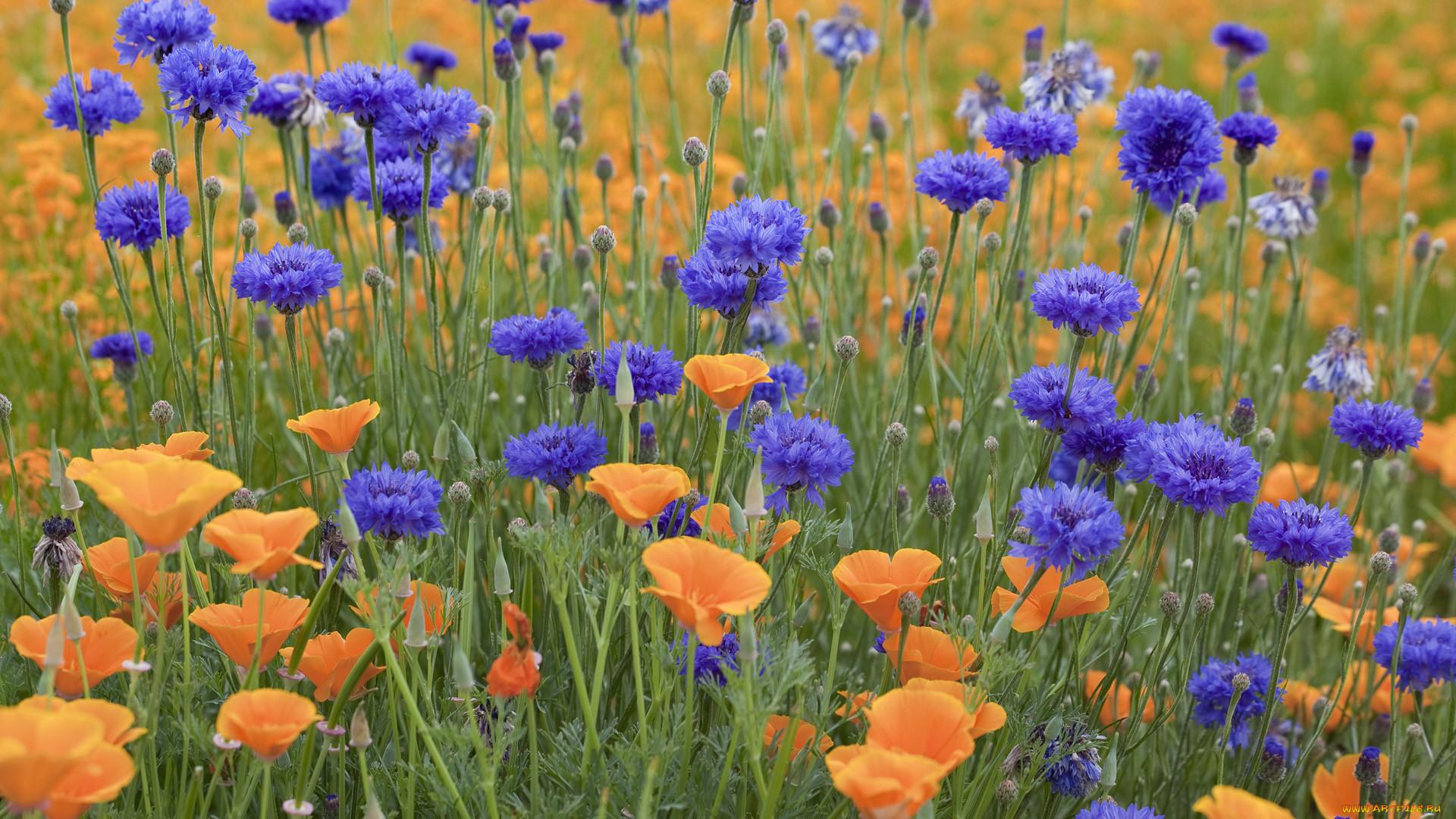 Фото с цветами оригинальное продукт обязательно